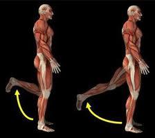 Двете функции - сгъване в коляното и разгъване в таза
