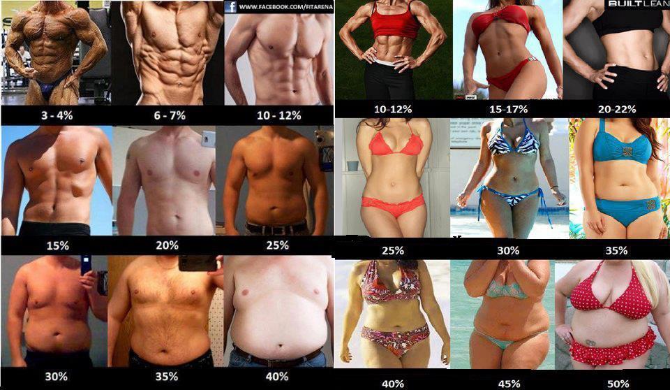 Процентите телесни мазнини в снимки